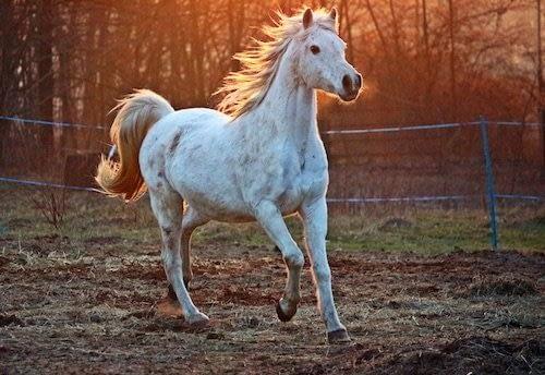 Que hacer en Queenstown con niños-Montar a caballo