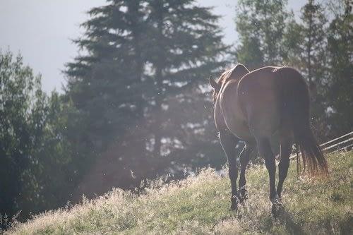 Pasear a caballo